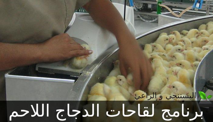 برنامج لقاحات الدجاج اللاحم